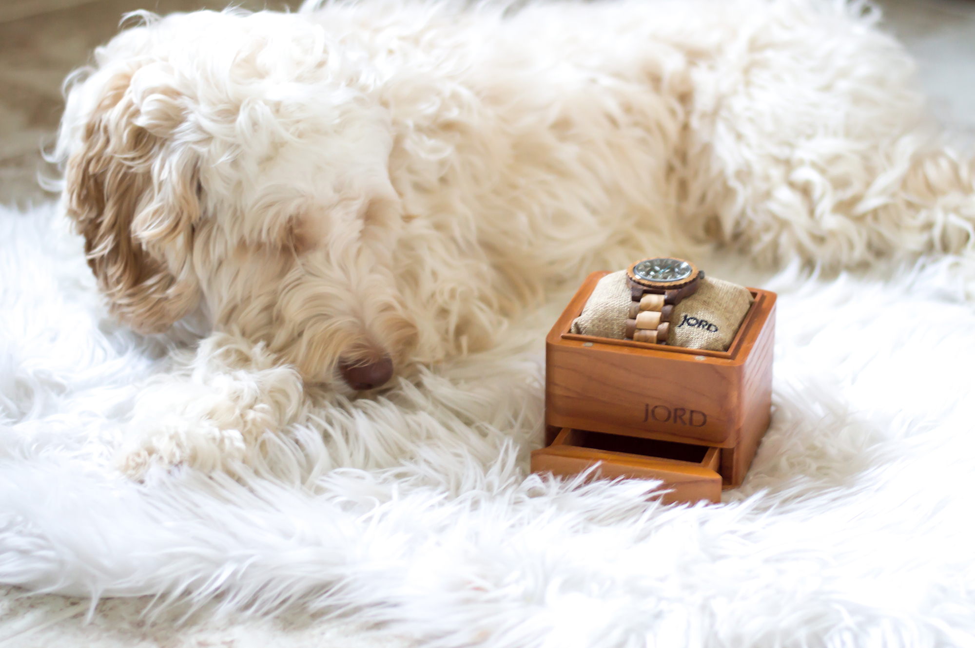styelled-elle-elisabeth-fashion-style-blogger-jord-wood-watches-luxury-watch-dover-series-valentines-day-for-him-ootd-australian-labradoodle-04