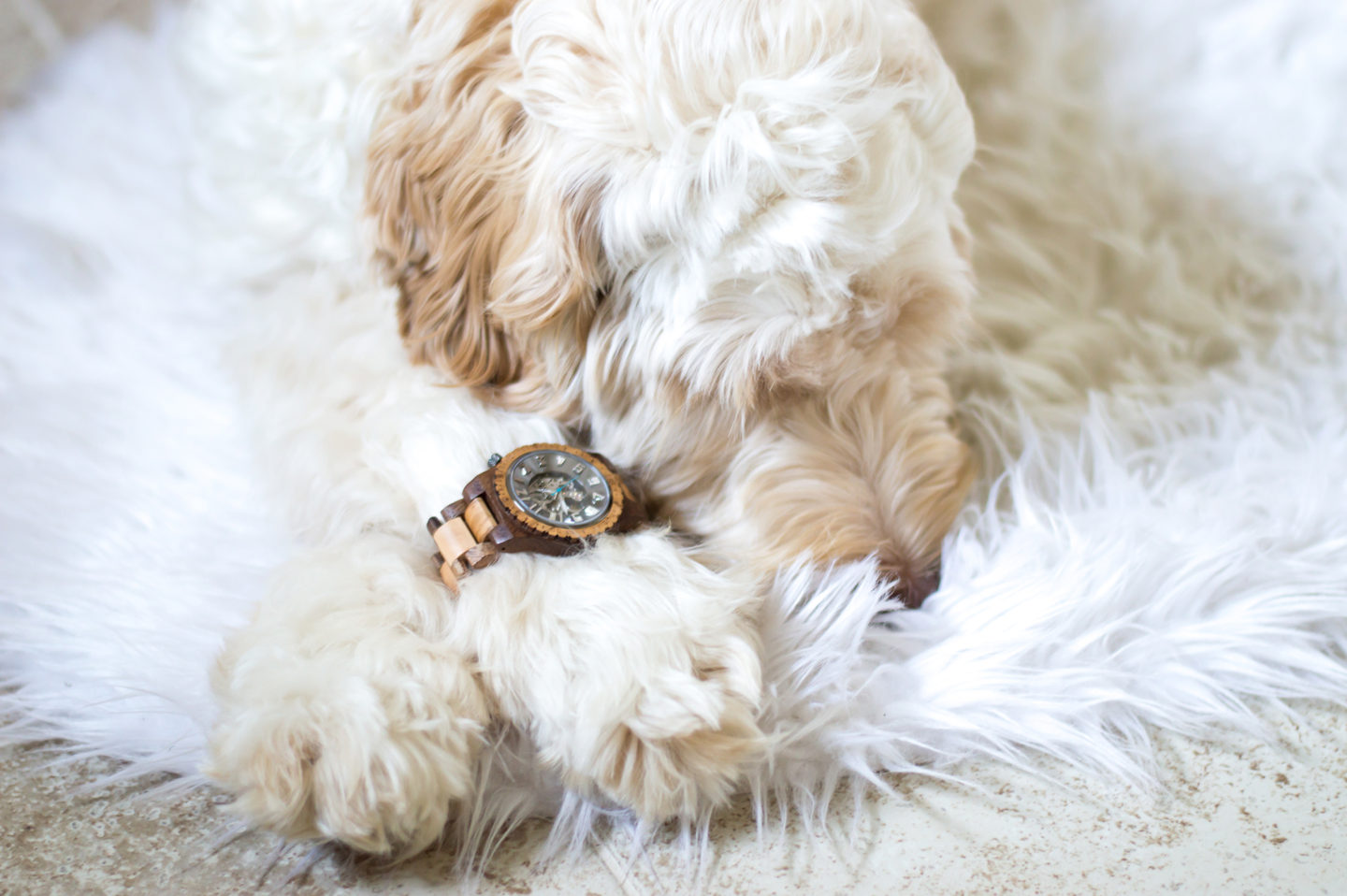 Winston has Heart Eyes over JORD Wood Watches!