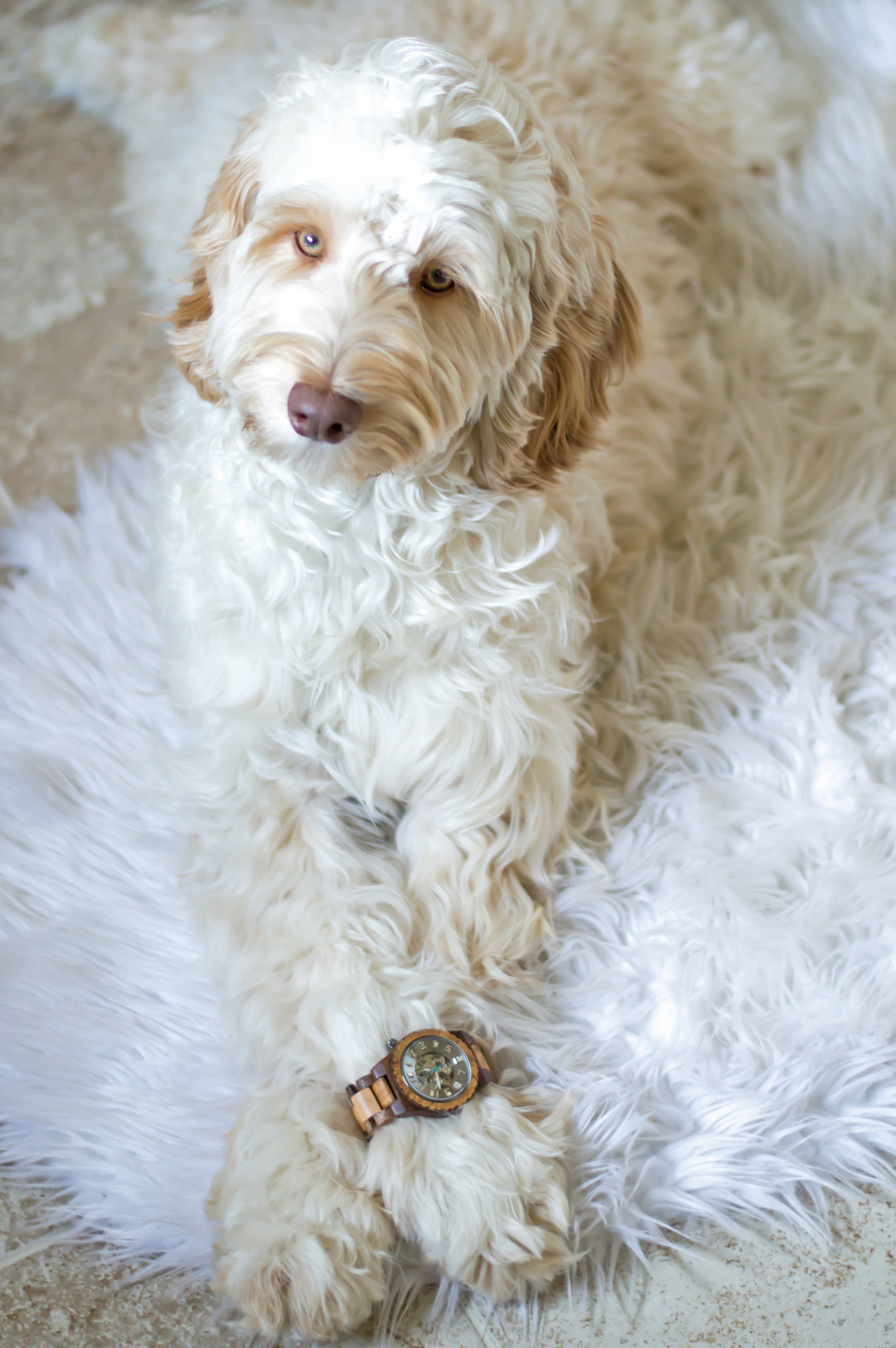 styelled-elle-elisabeth-fashion-style-blogger-jord-wood-watches-luxury-watch-dover-series-valentines-day-for-him-ootd-australian-labradoodle-08