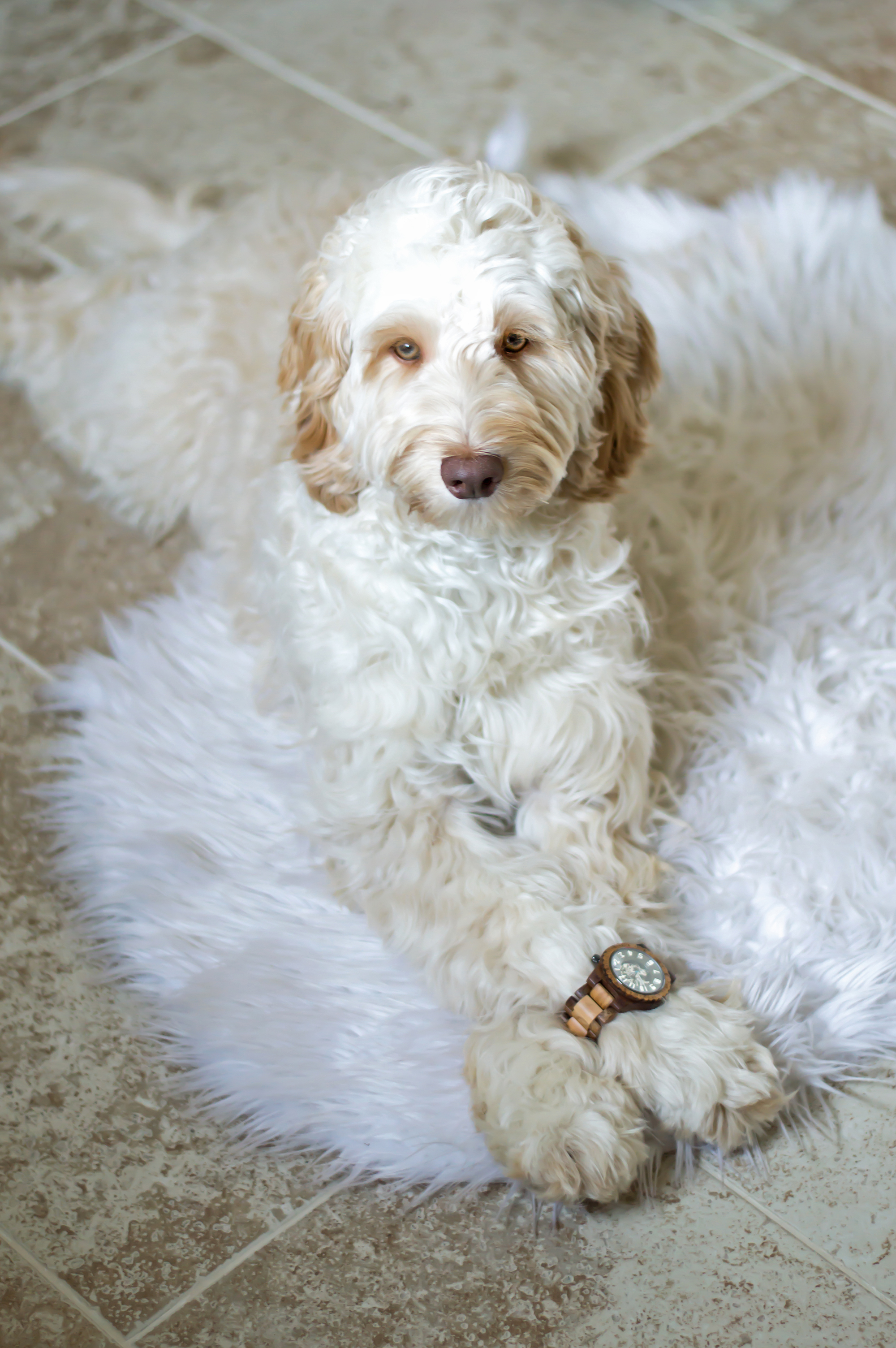 styelled-elle-elisabeth-fashion-style-blogger-jord-wood-watches-luxury-watch-dover-series-valentines-day-for-him-ootd-australian-labradoodle-10